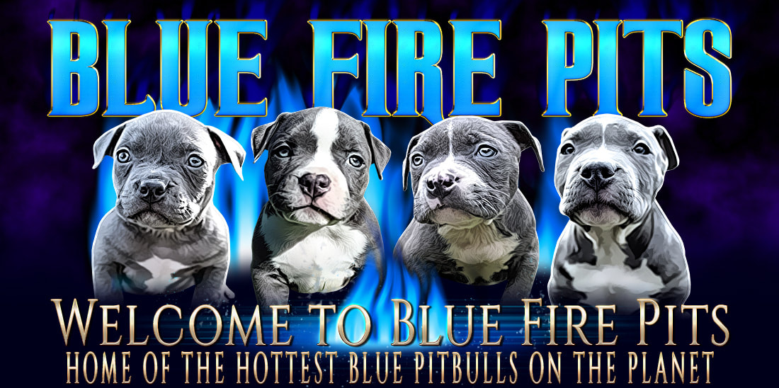 Blue Nose Pitbull Puppy Health | American Bully Diet | XXL